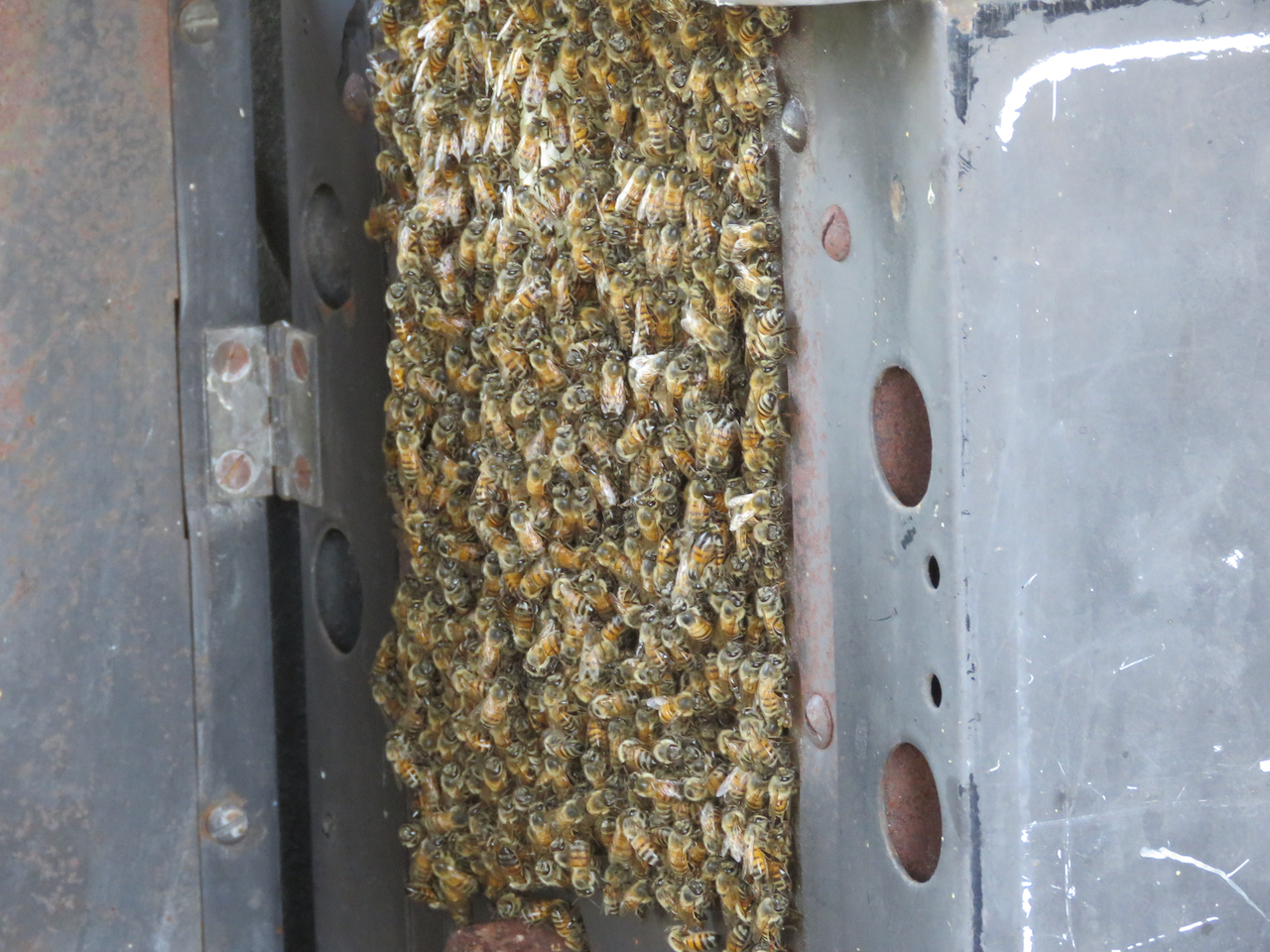 Beehive in an old wood stove