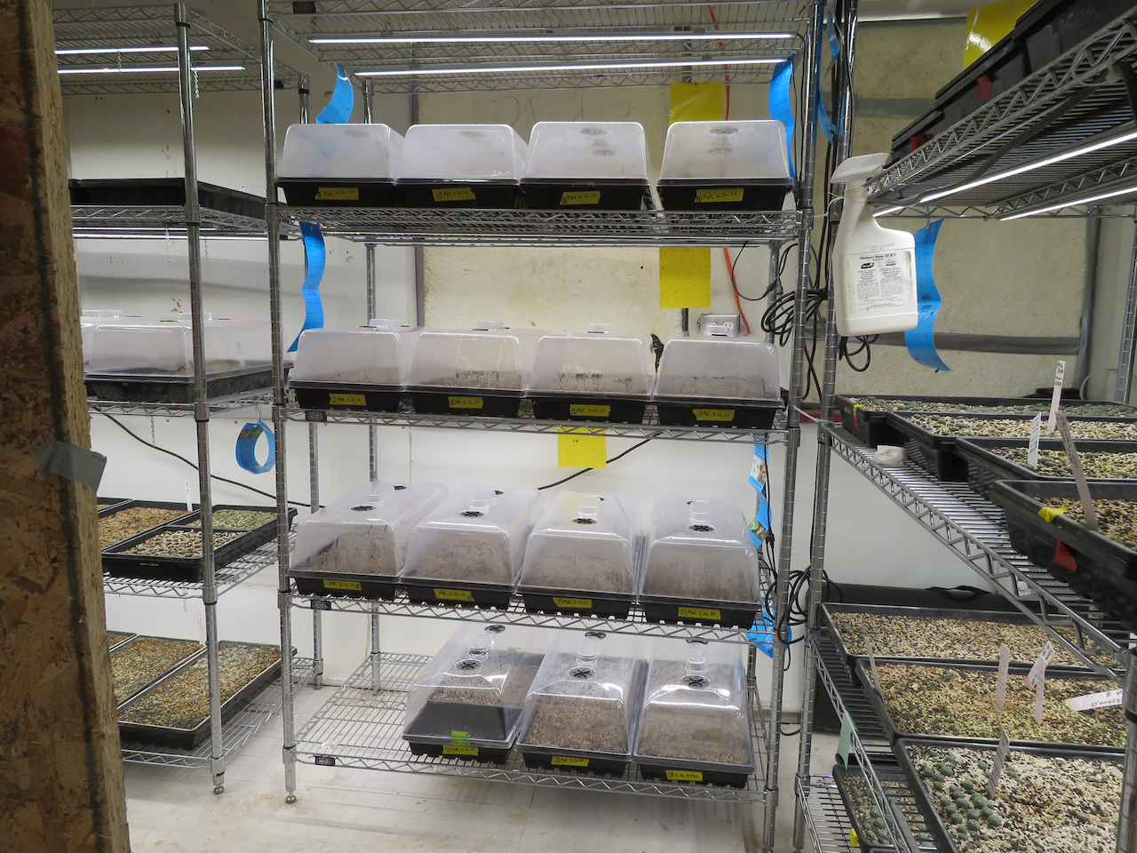 Trays of planted seeds
